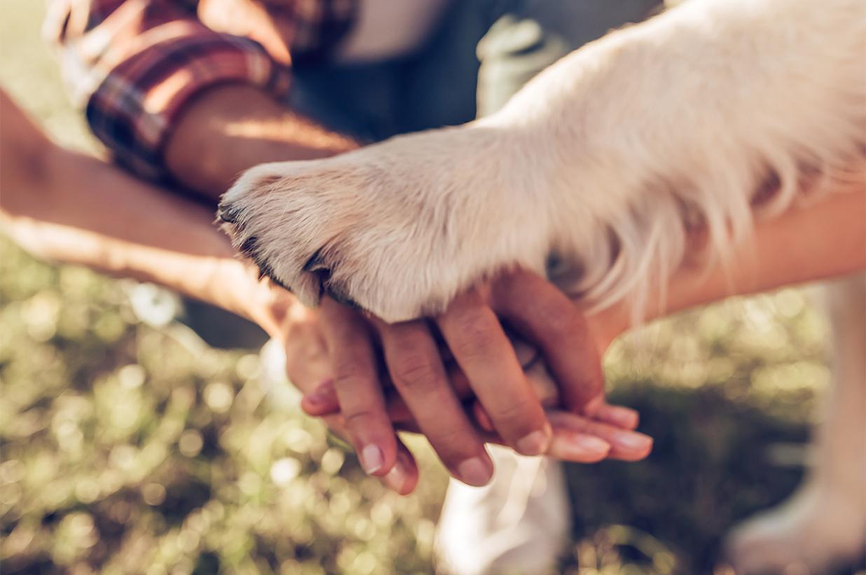 OrtoPaw Protesi e Tutori per animali